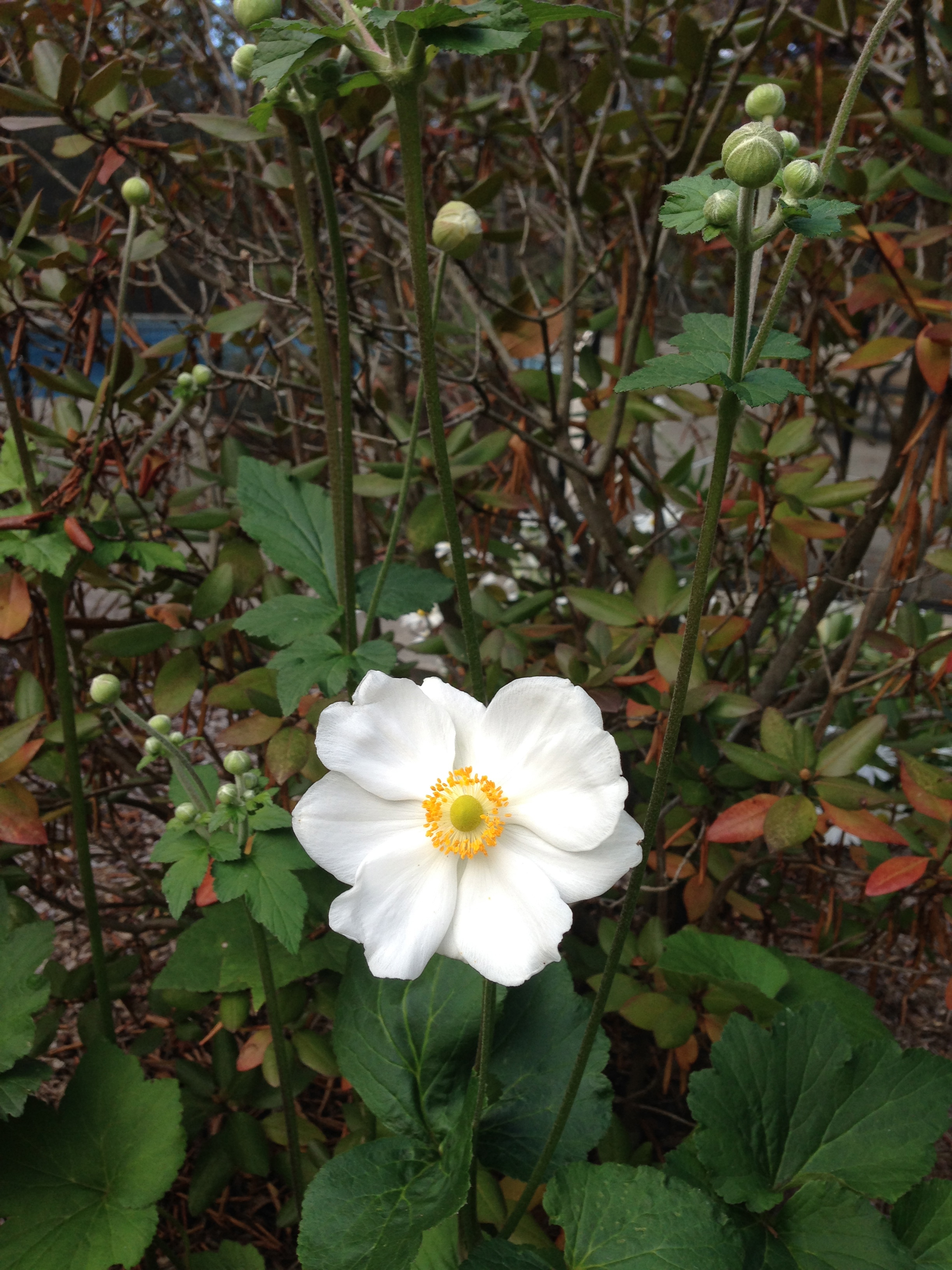 What's blooming now – October Bloomers