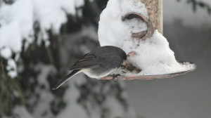 Birds feeding during the winter