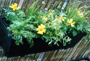 herb_box