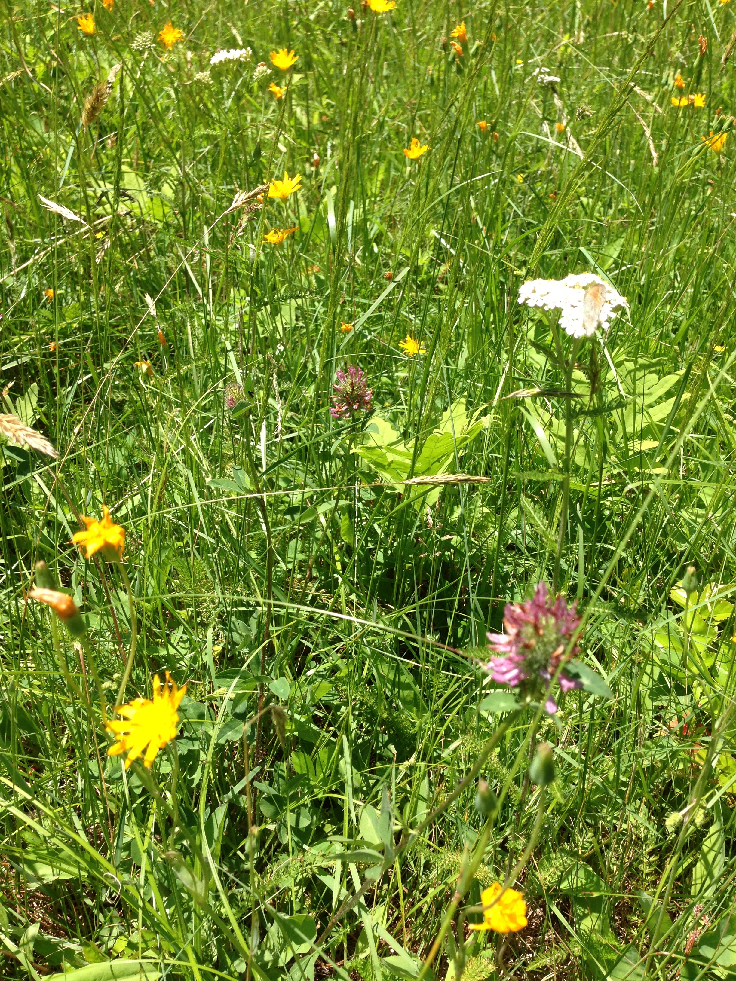 The wild lawn for Wild grass landscaping