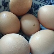 First Chicken Eggs