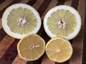 Meyer Lemon Oddities