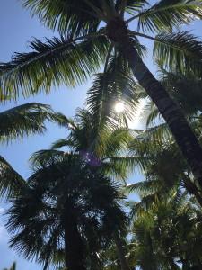 Vacation Pics