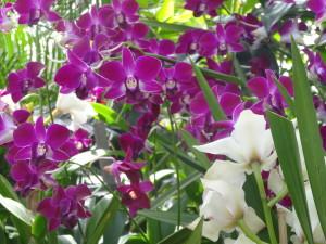 Orchid Extravaganza!