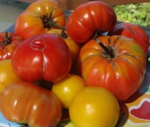 Summer Tomato Recipes