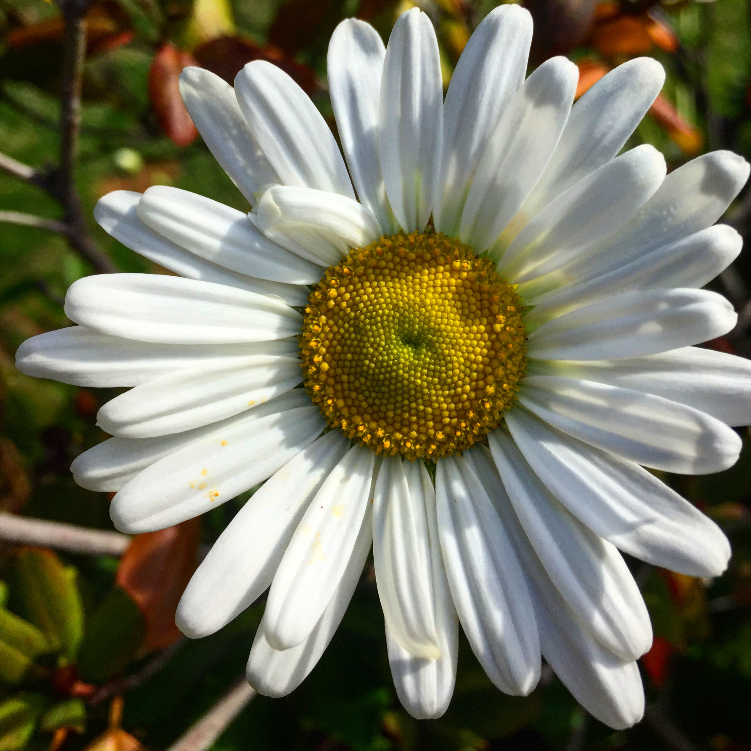 Three Great Plants For The Fall Border Extravagant Gardens