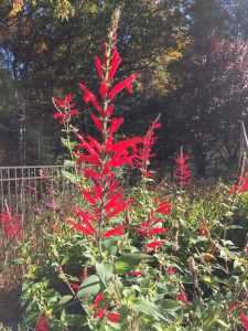 Three Great Plants for the Fall Border