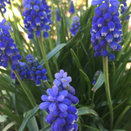 Perfect Spring Flowers