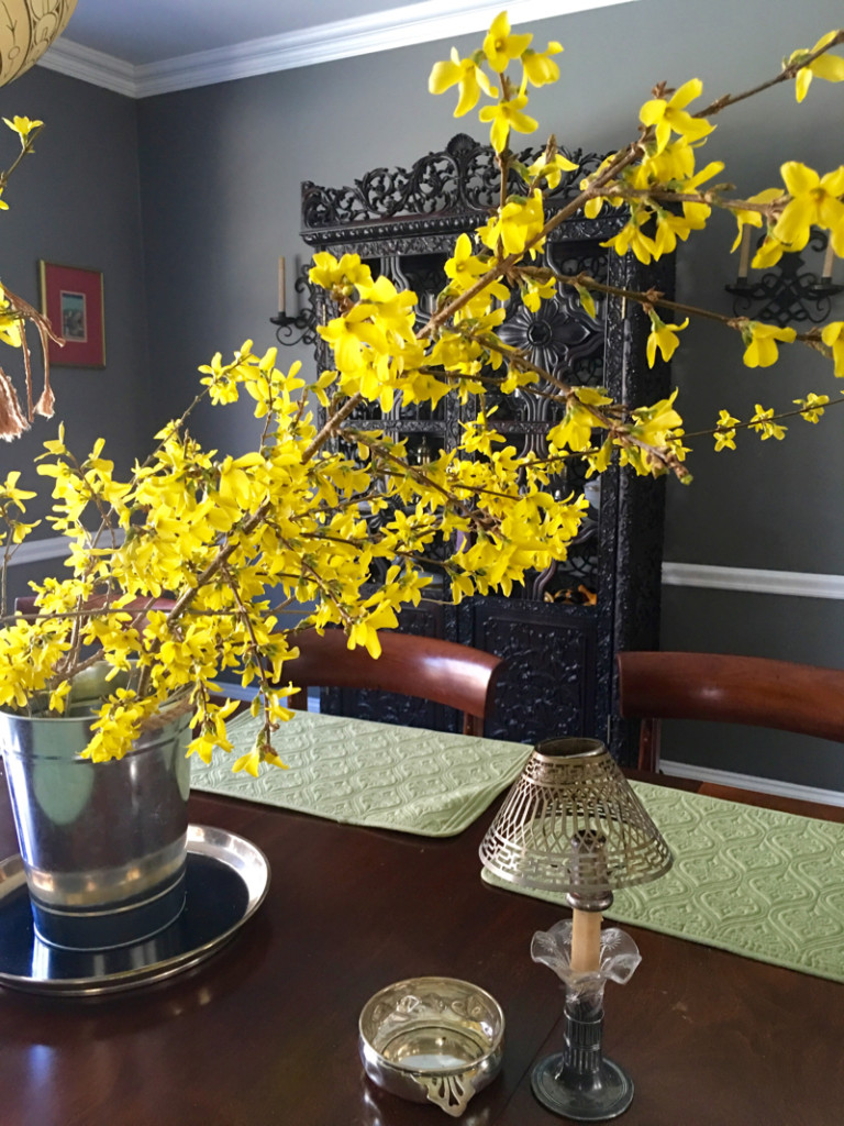 Forced Forsythia