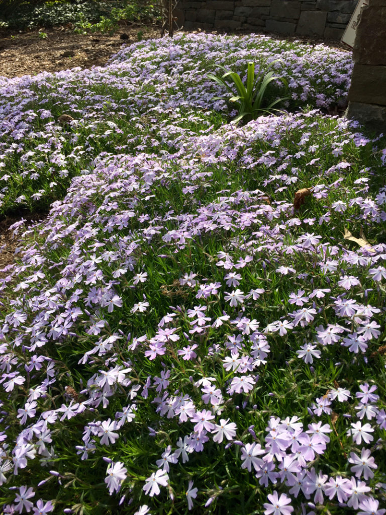 Five Greatest Groundcovers